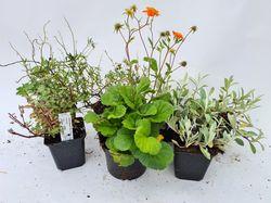 Oranje blauw borderpakket kant en klare tuinplanten pakket