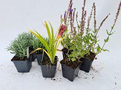 borderpakketten tuinplanten kant en klaar