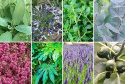 Aimée - Borderpakket Mediterrane tuinplanten