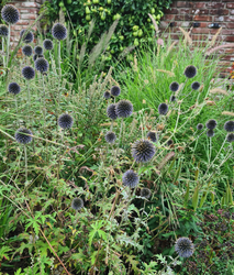 Vaste planten tuin blauw borderpakket bloeivorm