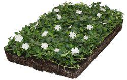 covergreen bodembedekker kant en klaar