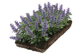 blauwpaars bloeide kant en klare plantenmatten bodembedekkers