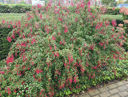 Vaste planten border bloeikleur rood