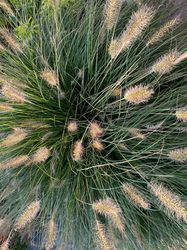 Siergrassen borders verhoogde borders tuinplanten