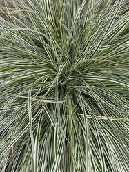 Carex tuinplanten bonte bladeren siergras pakket borders