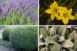 tuinplanten combineren voor pot
