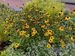 Geel bloeiende borderbeplanting tuinplanten yarinde bloeitijd