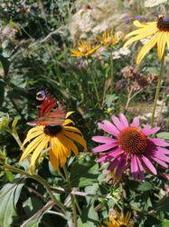 planten combinaties prairietuin aanleggen
