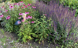 borderpakket kant en klaar tuinplanten compleet pakket