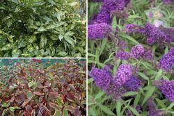 Borderplan Thijmen - Heesters - groenblijvend, bloeiend & herfstkleuren