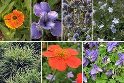 Borderplan Tom - Vaste planten & siergras borderpakket