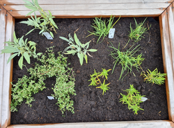 kant en klare tuinplanten borderpakket eetbaar