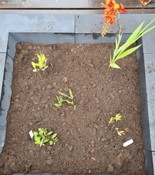 kant en klaar borderpakket tuinplanten tuinen vlinders