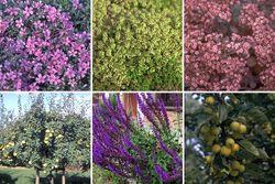 Willemijn - Borderpakket voor vogels, vlinders & bijen - Halfschaduw & Zon
