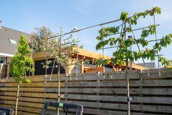 leilinde bomen tuinplanten vormbomen leischermen