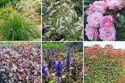 Zinzi - Borderpakket voor een vochtige tuin