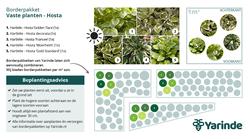 Beplantingsplan Hosta schaduw