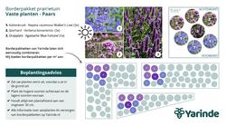 Beplantingsplan paars zon - Prairietuin
