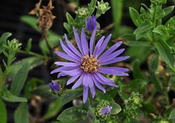 tuinplanten blauw inspiratie kant en klaar