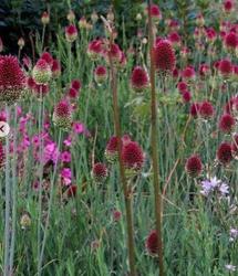 Bolvormige bloeiwijze combineren