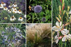 borderpakket droge onderhoudsarme tuinplanten