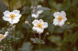 leuke bloemen