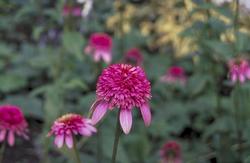 Prachtige bloeiwijze
