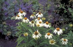 Witte bloeiwijze