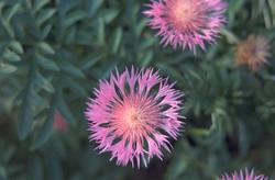 mooie bloeiwijze