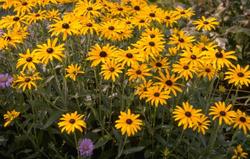 Droge grond droog bodem geel paars bloemen borderpakket