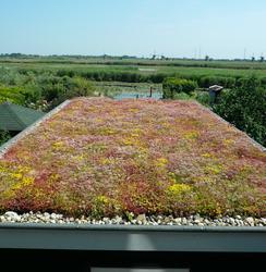afwerking groen dak