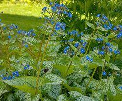 Bloemen blauw kleuren tuin