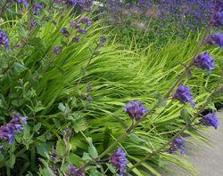 Mooie border tuinplanten