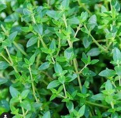 Tuinplanten borderpakket eetbaar
