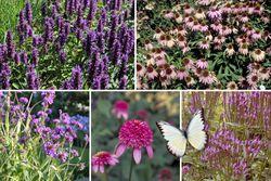 schitterende borderplanten borderpakket vlindertuin