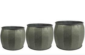TS Pot set van 3 Mikan thyme