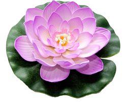 Velda Drijvende Vijverplant Lotus Roze 20 cm