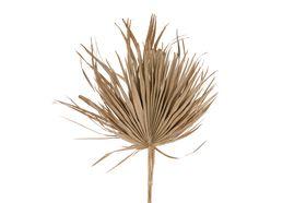 Dijk Natural Collections Palm Blad 75 cm 5 Stuks