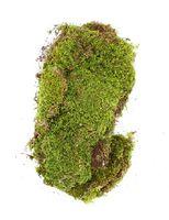 Plat groen mos 100 gram