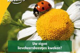 Ecostyle Lieveheersbeestjes Boerderij Kweekset