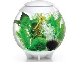 Aquarium biOrb Halo MCR 30 Liter Wit
