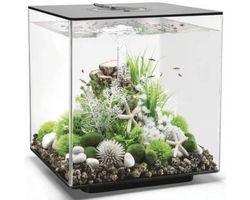Aquarium biOrb Cube 60 MCR Zwart