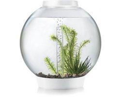 Aquarium biOrb classic MCR 30 liter wit