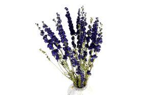 Droogbloemen boeket Delphinium - Blue
