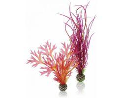 biOrb Plantenset M Rood & Roze