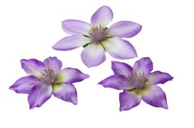 Velda Drijvende Vijverplant Clematis Paars 10/13 cm - 3 Stuks