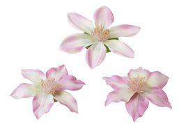Velda Drijvende Vijverplant Clematis Roze 10/13 cm - 3 Stuks