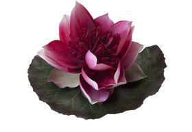 Velda Drijvende Vijverplant Lotus Fuchsia 15 cm