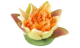 Velda Drijvende Vijverplant Lotus Geel 13 cm