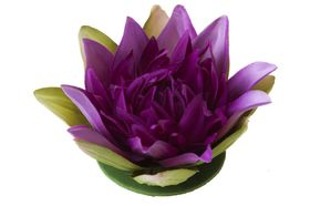 Velda Drijvende Vijverplant Lotus Paars 13 cm